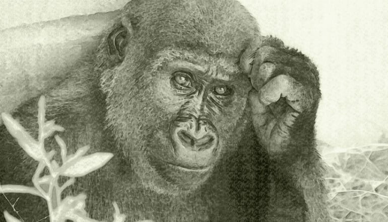 drawing of gorilla