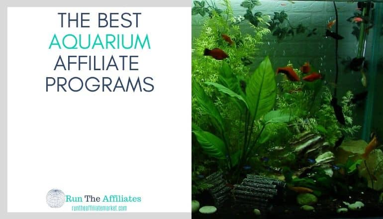 aquarium with green plants and orange fish as well as some accessories in the aquarium