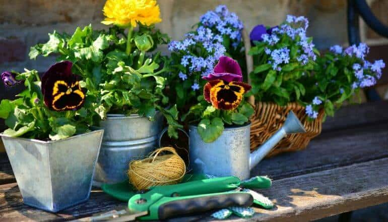 potted flowers ona bench