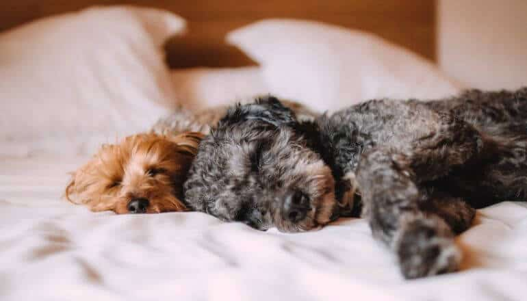2 puppies sleeping on a bed