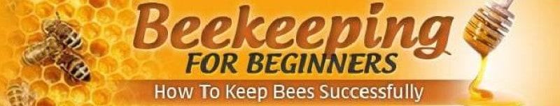 beekeeping for beginners screenshot