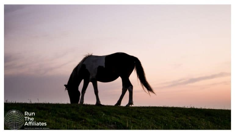 horse grazing on a small hill at sunset