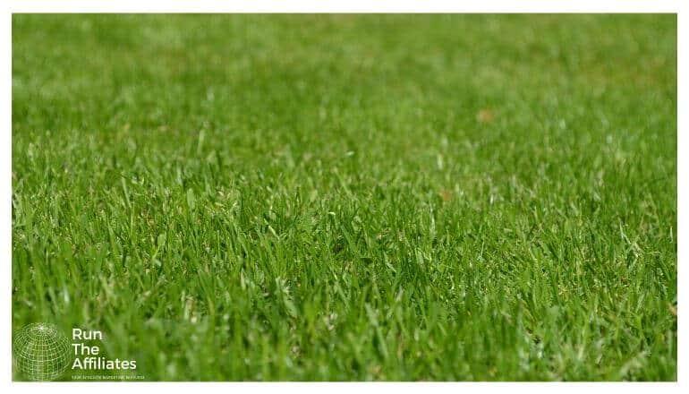a close up of grass