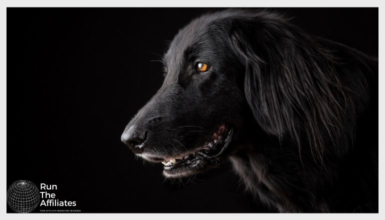 black retriever pup against a black background