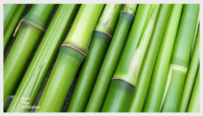 close up of bamboo reeds
