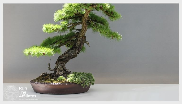 bonzai tree in front of a grey backdrop