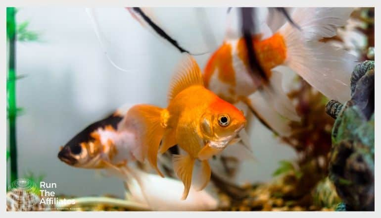 goldfish swimming in an aquarium
