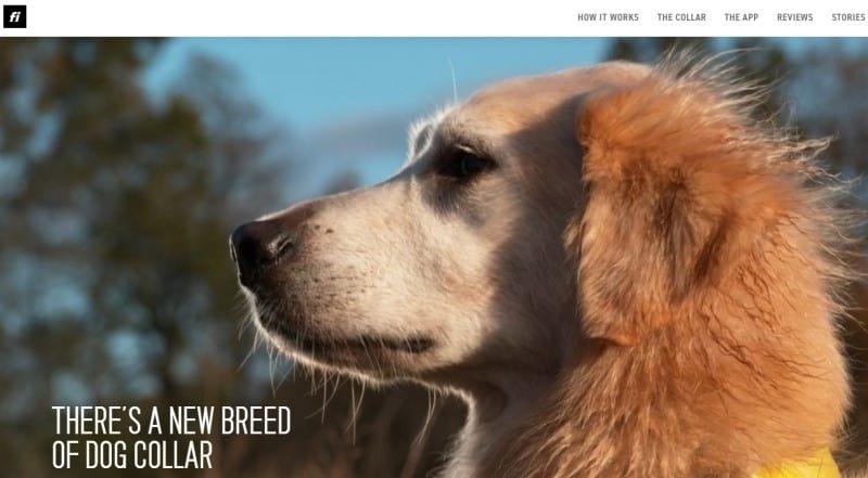 Fi Smart Dog Collar screenshot featuring a golden retriever wearing the Fi collar