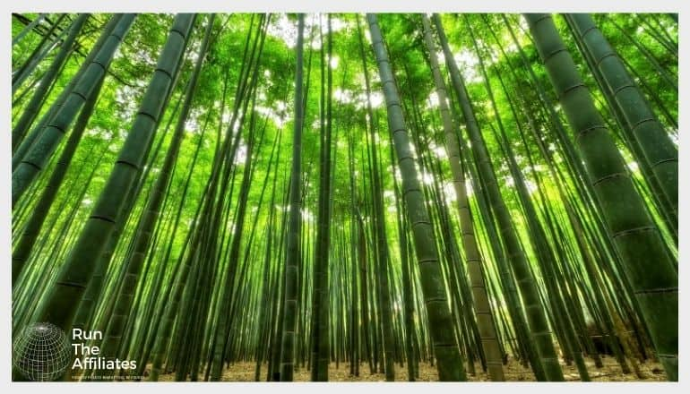 bamboo forest from ground level