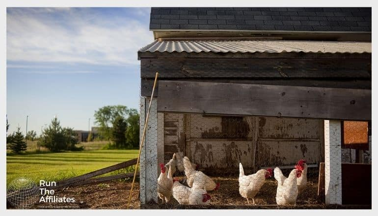 chicken coop with white chickens behind a wire fence