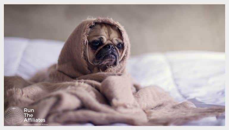 pug wrapped in a brown blanket sitting on a bed