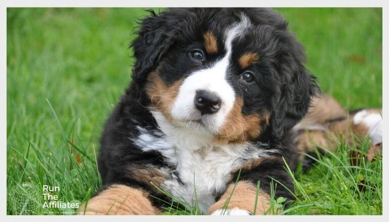 puppy laying in green grass