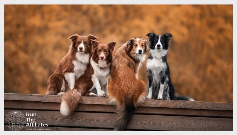 4 dogs sitting on a wooden bench