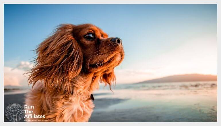small dog on a beach at sunset